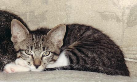 hide away cat litter box
