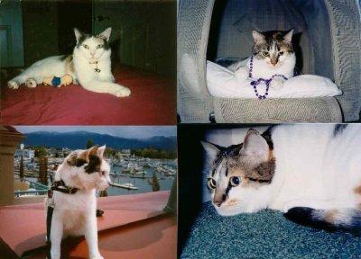 3 legged cat names