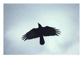 Kuro Nara [Jutsu] Crow