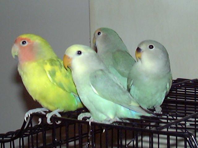 the lovebirds - photo #1