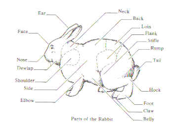 bunny diagram learning about each part of a rabbit's anatomy
