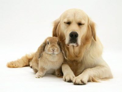 Puppies Bunnies on Rabbit To Other Rabbits Are Able To Live With Other