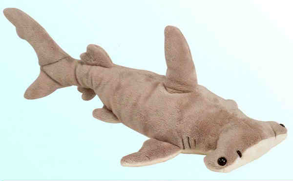 Hammerhead Shark picture 6