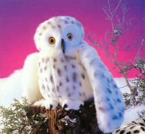 Toy Snow Owls Barn Owls More Fun Than Tiddlywinks